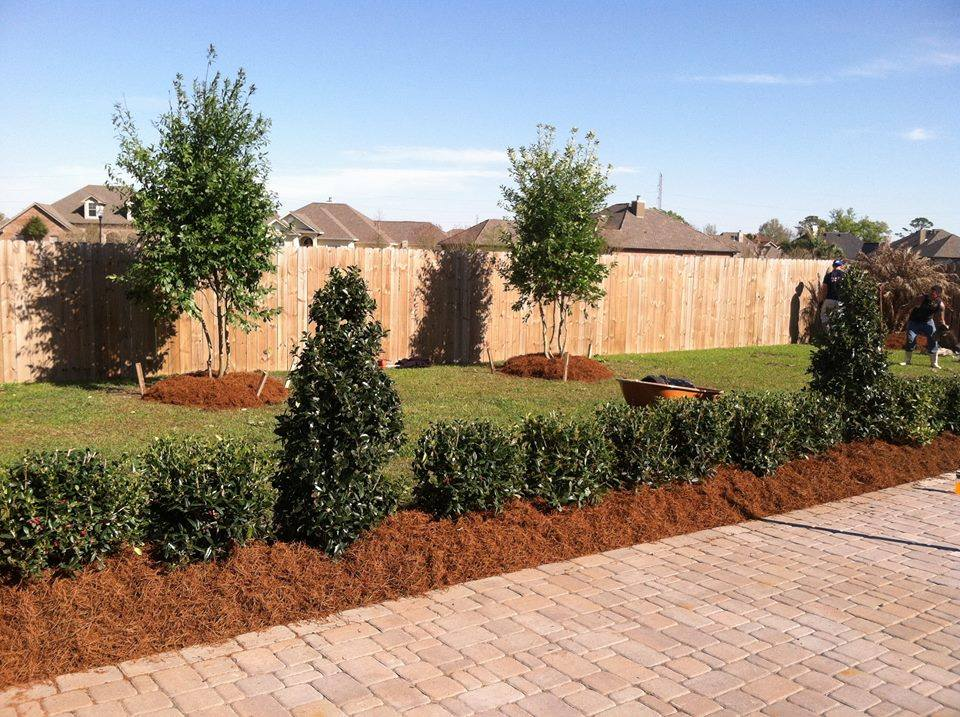Back yard pine straw install